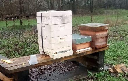 Bijen kort