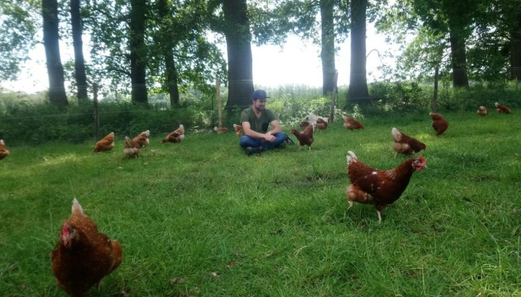 gewoon tussen de kippen zitten